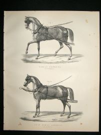 Miles Practical Farriery C1875 Antique Print. Single Harness & Pair Horse Harness